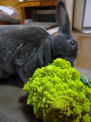 Broccogu